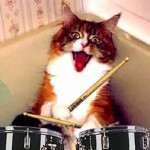 44 Songs About Cats